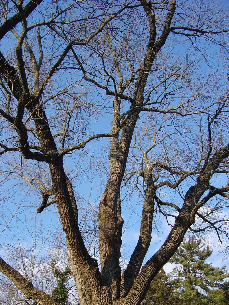 Colonial Park - Nov. 2008 004
