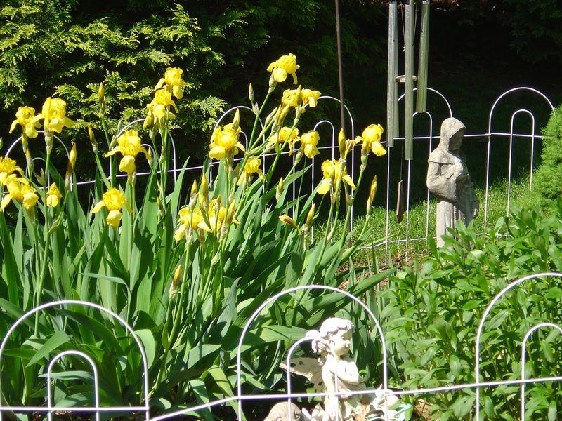 Garden in Bloom - May 2008 007