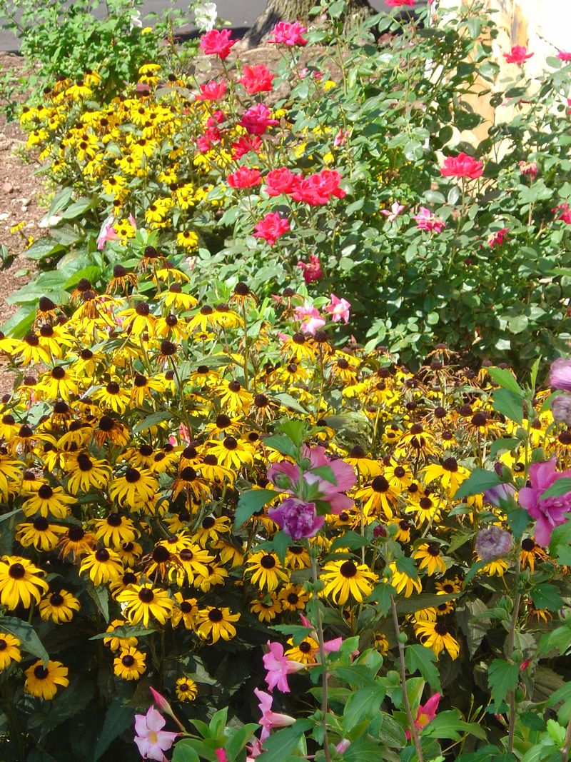 Front Yard Flowers - August 2008 019
