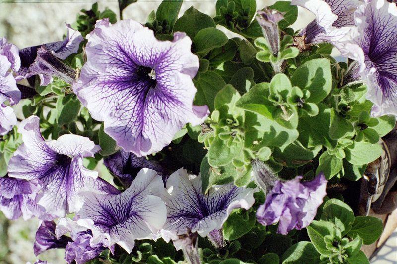 Flowers IMG04