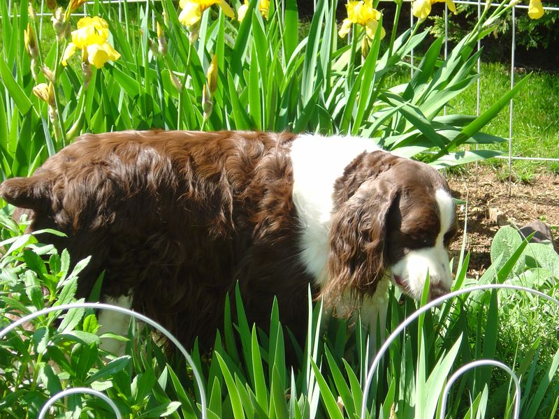 Socrates in Garden - May 2008 017
