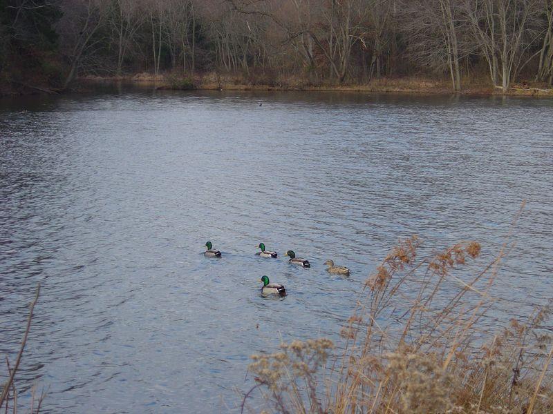 Colonial Park - Nov. 2008 020
