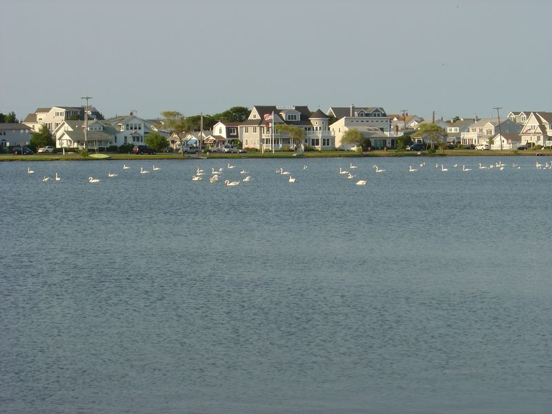 Spring Lake, NJ - June 2010 011